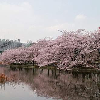 Παλαιά Ιαπωνία