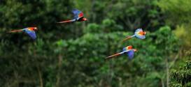 05_Amazonia.jpg