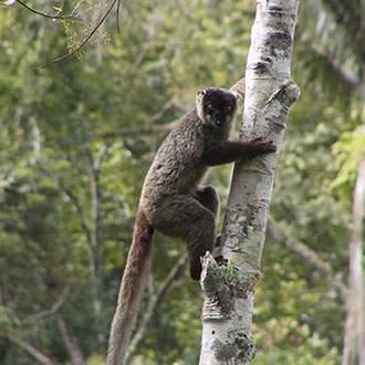 Λεμούριος Νήσος - Πανόραμα Κλασικής Μαδαγασκάρης