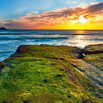 Νέα Ζηλανδία - Νησιά Φίτζι