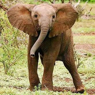 Κένυα - Τανζανία