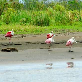Βασίλεια της Φύσης - Πανόραμα Κόστα Ρίκα - Ζούγκλα Τορτουγκέρο - Παναμάς