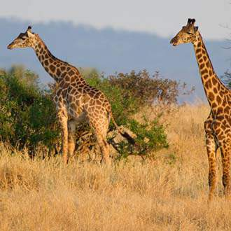 Τανζανία - Εξωτική Ζανζιβάρη - Σαφάρι σε 4 Εθνικά Πάρκα