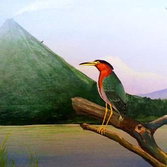 Βασίλεια της Φύσης - Πανόραμα Κόστα Ρίκα - Ζούγκλα Τορτουγκέρο